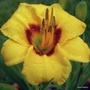 Siloam June Bug - Barbara Fox